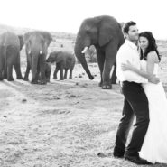 Katie & Pete's Wedding at Pilanesberg Nature Park