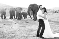 Katie & Pete's Wedding at Pilanesberg Nature Park